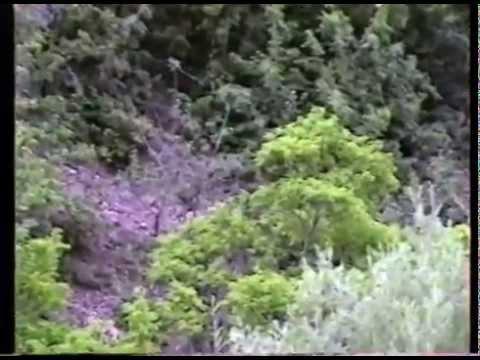 1991 Stratton Anniversary   Deer On The Mountain